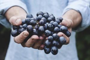grappoli nelle mani