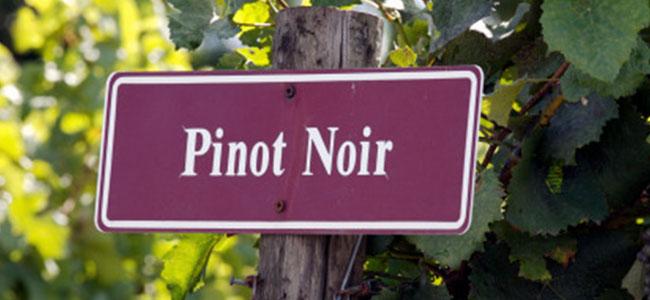 pinot_nero